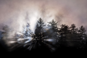 Orsiera Rocciavre Park, Chisone Valley, Piedmont, Italy. Larch trees in silhouette in the fog