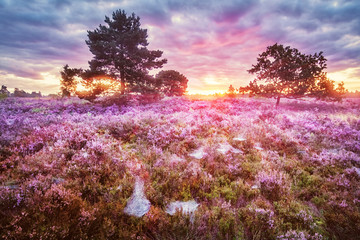 Lüneburg Heath, Sunrise, Germany