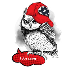 Owl in red cap. Vector illustration.