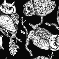 Seamless pattern with image owls on oak branches. Vector black and white illustration.