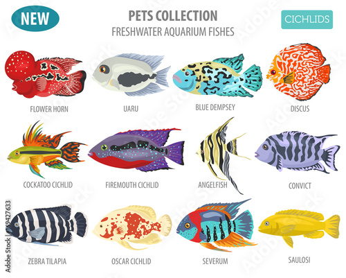 Freshwater Aquarium Fishes Breeds Icon Set Flat Style Isolated On