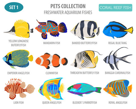Freshwater aquarium fish breeds icon set flat style isolated on white. Coral reef. Create own infographic about pet