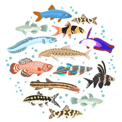 Freshwater aquarium fishes breeds icon set flat style isolated on white. Loaches, gobies, killifishes. Create own infographic about pets