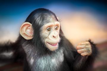 Cute baby chimpanzee
