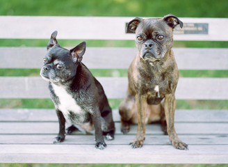 Two dogs on a bench