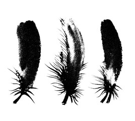Vector collection of beauty isolated feathers silhouettes. Ink drawn graphic set