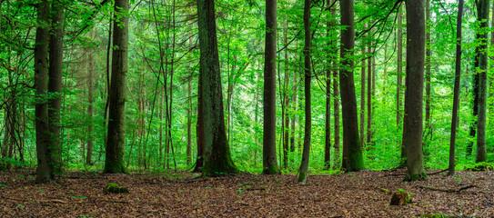 Bäume Wald Landschaft
