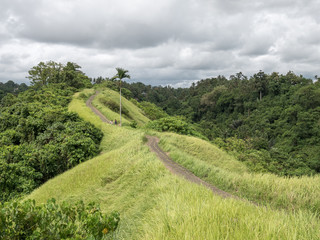 Campuhan Ridge Walk through a hills with green meadows in the town of Ubud, Bali