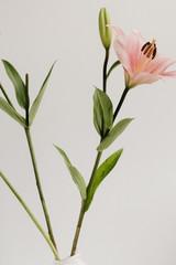 Geometric Lily