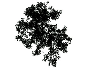 3d rendering of a silhouette tree isolated on white background