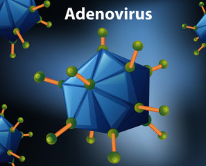Close up diagram for Adenovirus