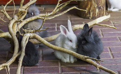 A pair of little rabbits. Nizhny Novgorod, Russia.