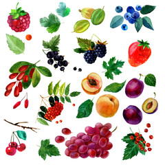 Watercolor illustration, set of fruit and berries, parts and leaves, peach, plum, grapes, strawberries, raspberries, cherries, currants, blackberries, blueberries, gooseberries, barberries and rowan.