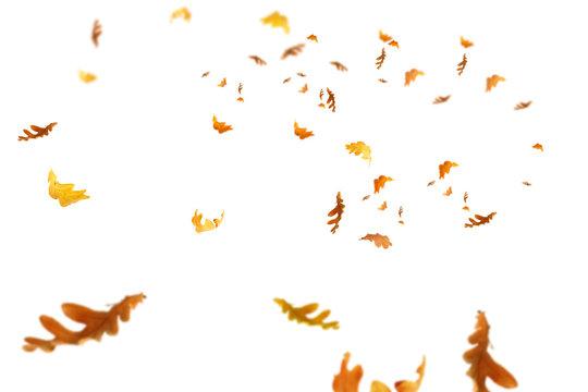 Fallende Herbstblätter isoliert auf weißem Hintergrund