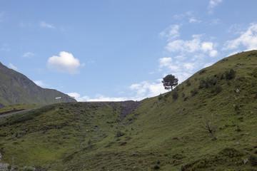 Молодое дерево на зеленом склоне, живописный пейзаж, природа