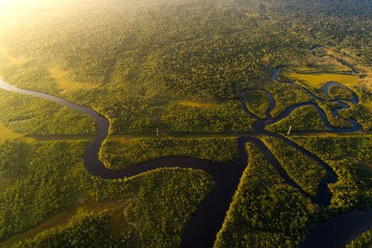 Amazon Rainforest in Brazil