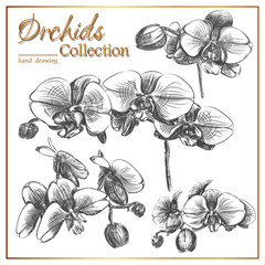 Vintage Orchids Collection- Hand painted