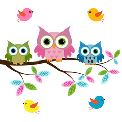 owls on a branch with birds