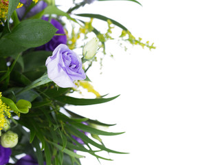 Purple Rose On White Background In Working Space