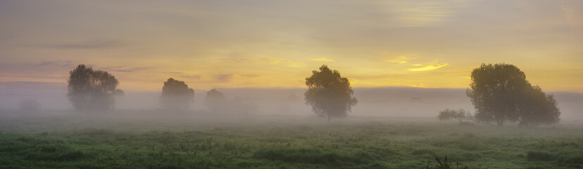 Gorgeous summer colorful and foggy morning in the meadow, trees and grass fogged in the mist,panorama Fototapete