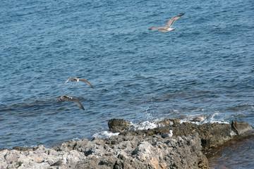 Birds flying in blue sea