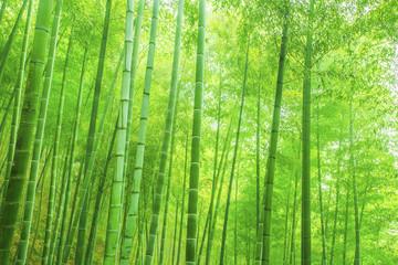 Photo sur Plexiglas Bamboo bamboo forest