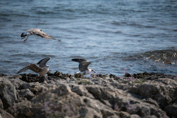Birds on rocks of sea