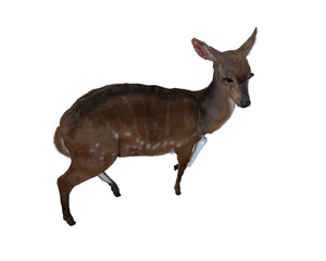 3d illustration of a deer