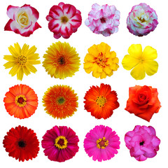 flowers collection on White background