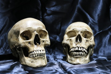 Two old skulls with cobweb on wooden table with black background in night time / Still life style and Select focus