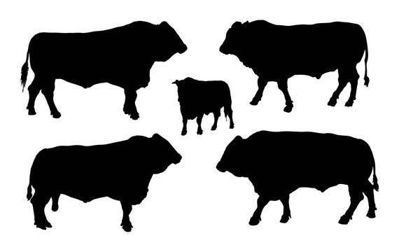 Standing adult bull vector silhouette illustration isolated on white background. Buffalo, bull group collection.
