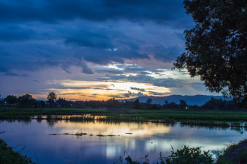 Landscape of rice field  at twilight sky sunset Wall mural