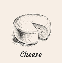 Head of Cheese Hand Drawn Vector Illustration