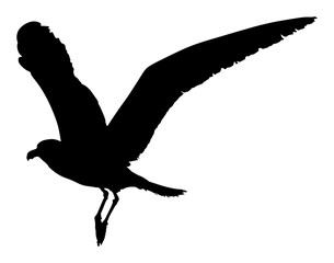 Seagull fly vector silhouette isolated on white background, wings spread shadow illustration. Bird silhouette flying. Sea mew.