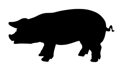 Pig vector silhouette isolated on white background.
