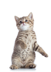 funny playful kitten is standing
