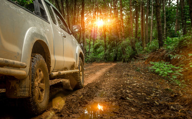 Off-road travel in the forest road. Beautiful nature sunset