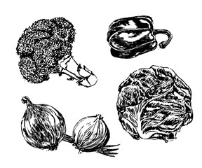 drawing set of vegetables: broccoli, onions, cabbage sketch by hand drawn vector illustration