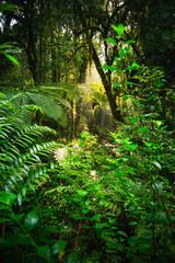 Rainforest - Bwindi Impenetrable N. P. - Uganda