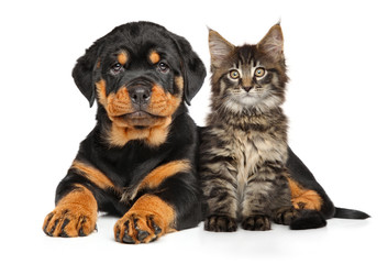 Wall Mural - Puppy and kitten
