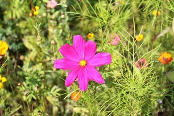 pinkfarbene Blume auf grüner Sommerwiese