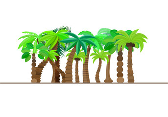 Palm tree, forest, jungle isolated in caricature style, set on a white background. Vector illustration.