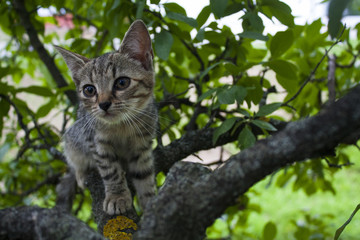 kitty cat on a tree
