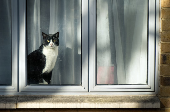 Curious black and white cat sitting on window and looking at city street