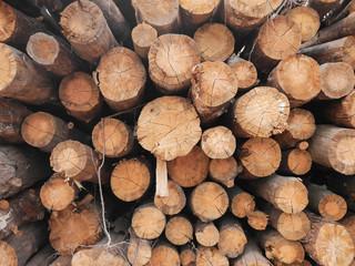 Keuken foto achterwand Brandhout textuur Wooden natural cut logs textured background