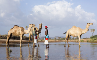 Samburu tribesmen, watering their camels in river. Kenya, Africa.