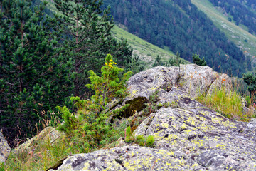 Amazing nature view of green mountain forest and tree growing on a rock, natural landscape perspective, Caucasus, Russia