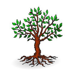 Beautiful tree with leaves, cartoon on a white background.