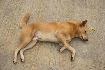 onely dog homeless stray on street cement floor, sidewalk,