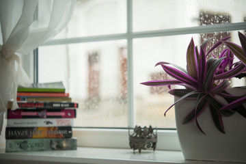 Rain outside the window, on the windowsill are books and a flower in a pot.